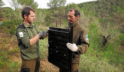 Dos empleados del Ibanat instalan una de las trampas para controlar la proliferación de coleópteros.