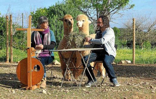 Bart y San, junto a los dos ejemplares de alpacas preñados que darán a luz a los primeros cien por cien ibicencos.