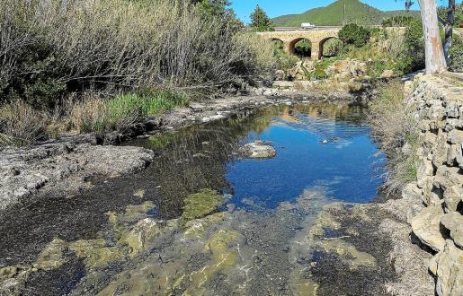 La posidonia retirada del río se ha llevado a un punto de acopio para que se seque.