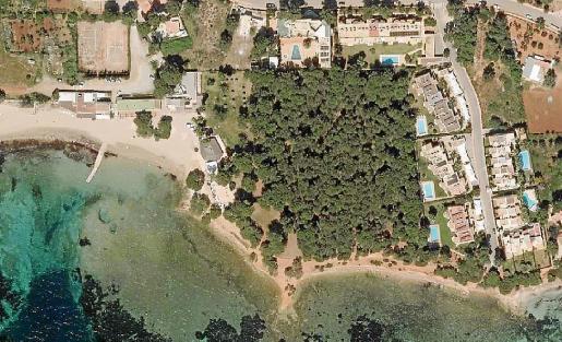 Imagen del pinar de Cala Pada que se va a proteger.