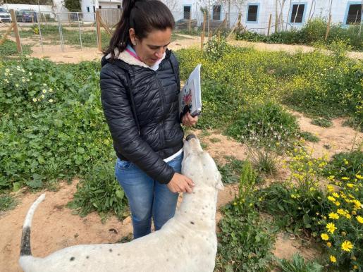 Ya son 60 las adopciones formalizadas desde la puesta en marcha del actual servicio de recogida, gestión y adopción de animales que se impulsó el pasado julio.
