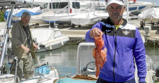 En primer plano Pedro enseña una de las tres 'rojas' con las que regresó ayer al Club Náutico de Ibiza. Detrás, Víctor recoge los aparejos de su pequeña embarcación.