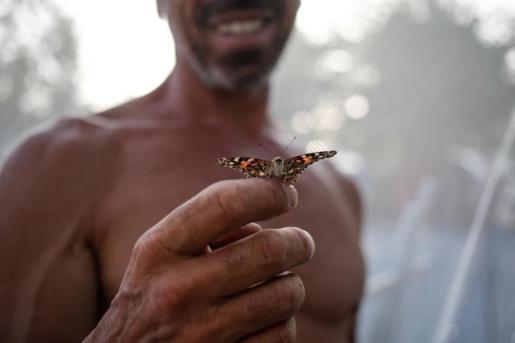 Una mariposa, sobre la mano de un hombre.