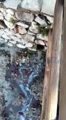 Vertidos fecales en el barrio de ses Figueres