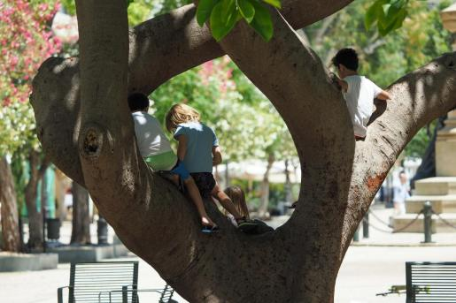 Niños jugando en un árbol de Vara de Rey.