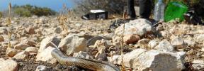 «El área de dispersión de las serpientes en la isla de Ibiza no para de aumentar»