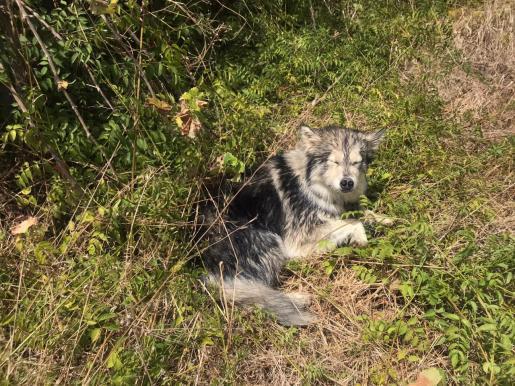 Imagen del perro rescatado.