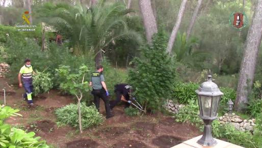 Imagen facilitada por la Guardia Civil de la plantación.