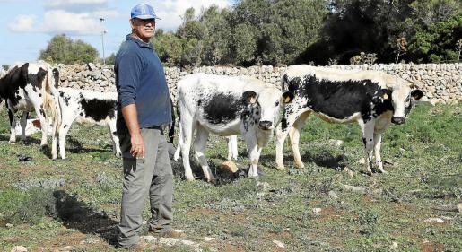 Mquel Taltavull posa feliz junto a los ejemplares de vaca de la Reina que tiene a su cuidado.