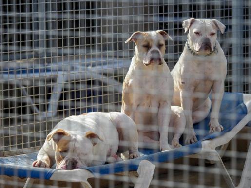 Perros en Sa Coma.