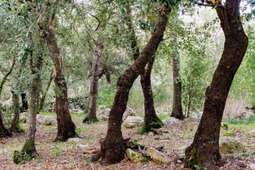 02/01/2021 Bosques de Baleares POLITICA ESPAÃ'A EUROPA ISLAS BALEARES AUTONOMÍAS CAIB
