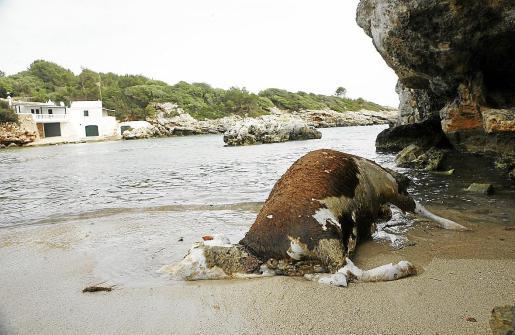 El hallazgo de cadáveres correspondientes al transporte marítimo de ganado se produce tanto en alta mar como en la costa. No deberían hallarse cuerpos enteros.