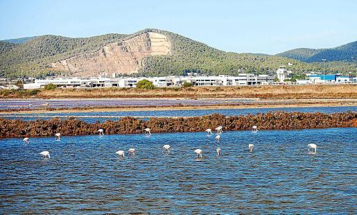 Un grupo de flamencos en un estanque de Ses Salines.