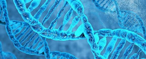 Esta investigación estudia la estructura que se forma en las secuencias de ADN y ARN que se encuentran en las regiones promotoras del oncogén BCL2.