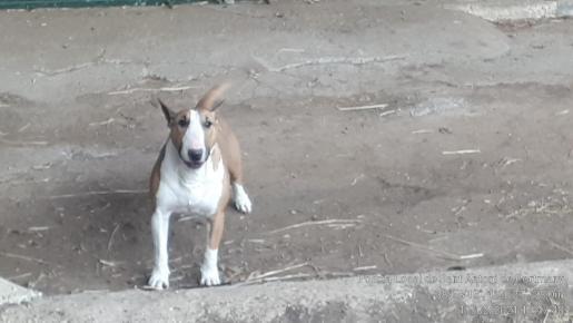 Imagen del perro.