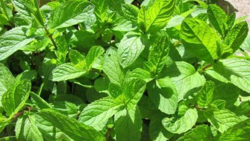 Los aromas de las plantas son, en muchos casos, relajantes y evocan a lugares rurales, tradicionales y repletos de naturaleza.