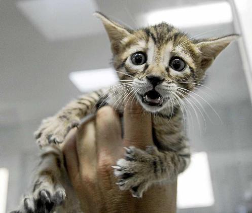 Un gato abandonado en las instalaciones de Sa Coma.