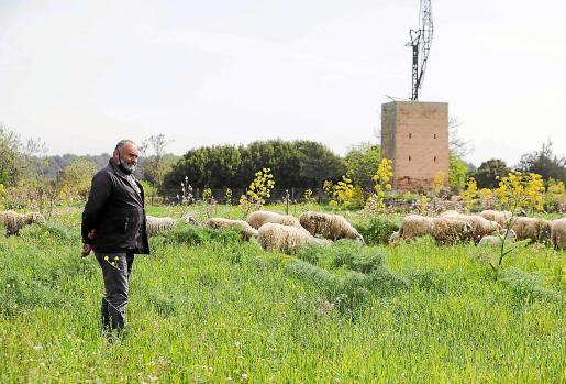 Un pastor de la isla acompaña al ganado en su finca.