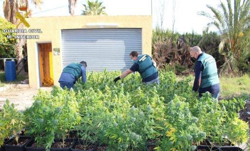 Los agentes hallaron plantas de marihuana por toda la propiedad.
