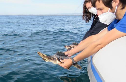 Marina y Xeresa regresaron ayer al mar tras ser rescatadas una frente a Valencia y otra varada en Dénia.