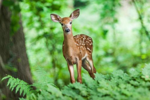Las personas que lo transportaban no contaban con nociones básicas en cuanto al cuidado y a las necesidades de un animal salvaje.