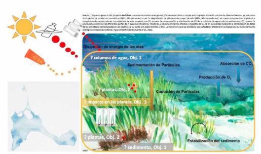 Un proyecto de la UIB sobre posidonia gana el Save Posidonia Project.