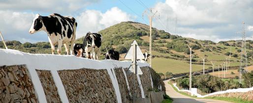El sector lácteo camina desde hace tiempo al filo de la navaja pero en éste último año la situación se ha recrudecido, poniéndolo a las puertas de su desaparación.
