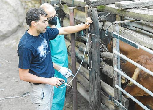 Los veterinarios del Consell y de ADS, Jordi Massip y Eliseo González en plena campaña de vacunación contra la lengua azul.