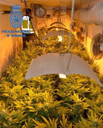 Imagen de la plantación desmantelada por la Policía Nacional de Eivissa