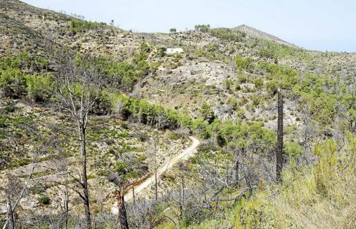 Imagen de la Serra de Morna, donde ya se pueden vislumbrar los primeros brotes verdes.