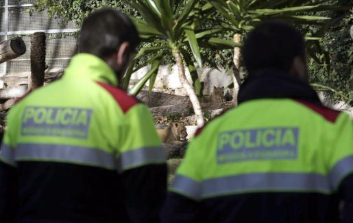 La Policía, en la zona de los leones del zoo de Barcelona tras el trágico suceso.