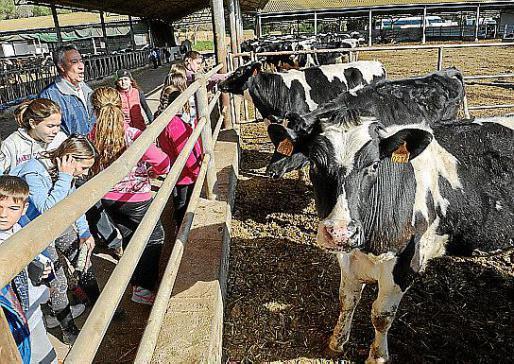 Los estudiantes aprendieron en directo cómo funciona una granja y de donde vienen algunos alimentos. Foto: SERGIO CAÑIZARES