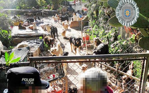 Patio de la casa particular donde vivían hacinados los animales domésticos en el municipio de Sant Antoni.
