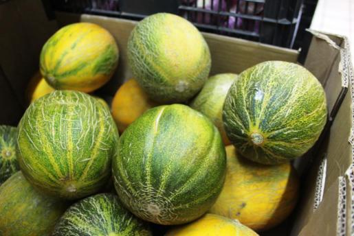 Los primeros melones ibicencos llegan al mercado. Foto: D.M.