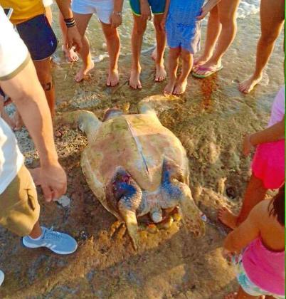 La tortuga aparecida ayer en Formentera podría llevar cinco semanas muerta.