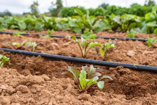 Armat dijo que, con el uso del goteo, los campesinos son los primeros que ahorran agua.