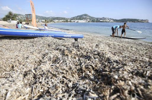 Poca gente fue ayer a practicar paddle surf a la playa de Talamanca, donde la posidonia seguía sobre la arena.