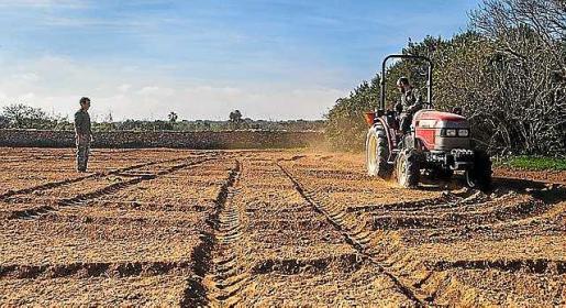 Terreno donde se ha iniciado la siembra.