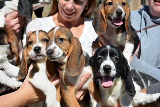 Estos son los cachorros nacidos de la fecundación in vitro.
