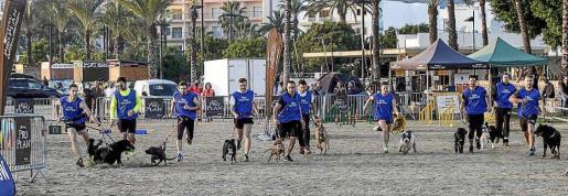 Los perros y sus dueños corriendo ayer por s'Arenal. Foto: DANIEL ESPINOSA