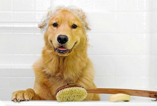 Un perro sin problemas de piel debería bañarse, como máximo, una vez por mes, incluso con bañarlo cuando esté sucio o unas tres veces por año suele ser suficiente.
