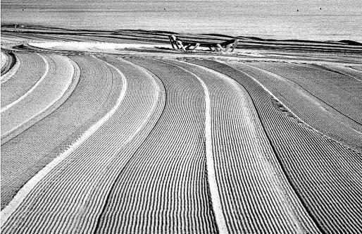 La imagen ganadora del primer premio en blanco y negro, de José Tomás, que lleva por título 'Entre líneas'.