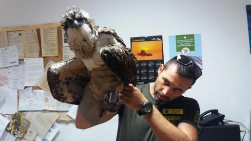 Un agente de medio ambiente con el águila.