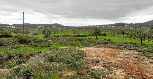 En la imagen, el Pla de Corona recuperado de las fuertes lluvias que lo inundaron el lunes.