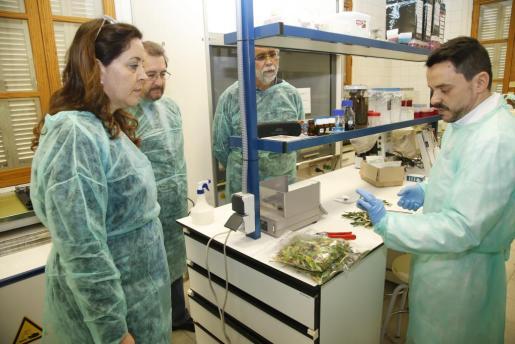 «Ahora, cuando la plaga se ha extendido, no sería razonable aplicar medidas drásticas», consideran los biólogos.