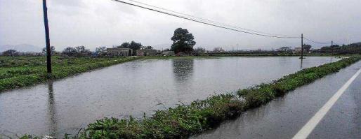 Un campo próximo a ses Salines anegado por la gran cantidad de lluvia caída. Foto: DANIEL ESPINOSA