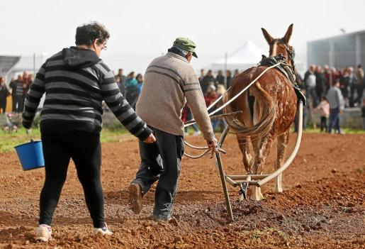 La mejor manera de enseñar a los más jóvenes cómo se realizaban antaño las faenas del campo es con una exhibición 'in situ'.