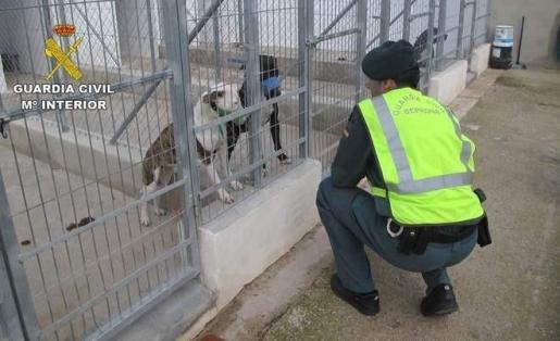 Un agente mira a dos de los perros involucrados en el ataque.
