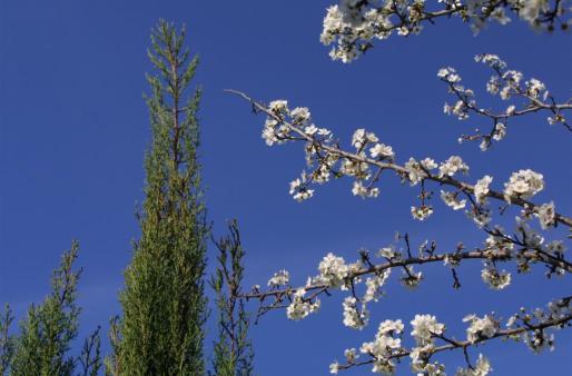 Las imágenes de los almendros en flor se plasmarán estos días sobre cielos serenos y soleados.