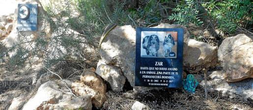 La tumba de Zar es una de las más recientes que alberga el cementerio ilegal de mascotas.